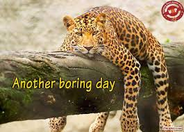 bored-lepard Boredom and High Return Investing